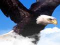 Decorah Eagles Livestream