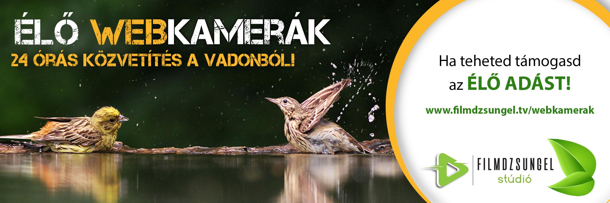Rétisas fészek a Duna-Dráva Nemzeti Parkban 2. kam