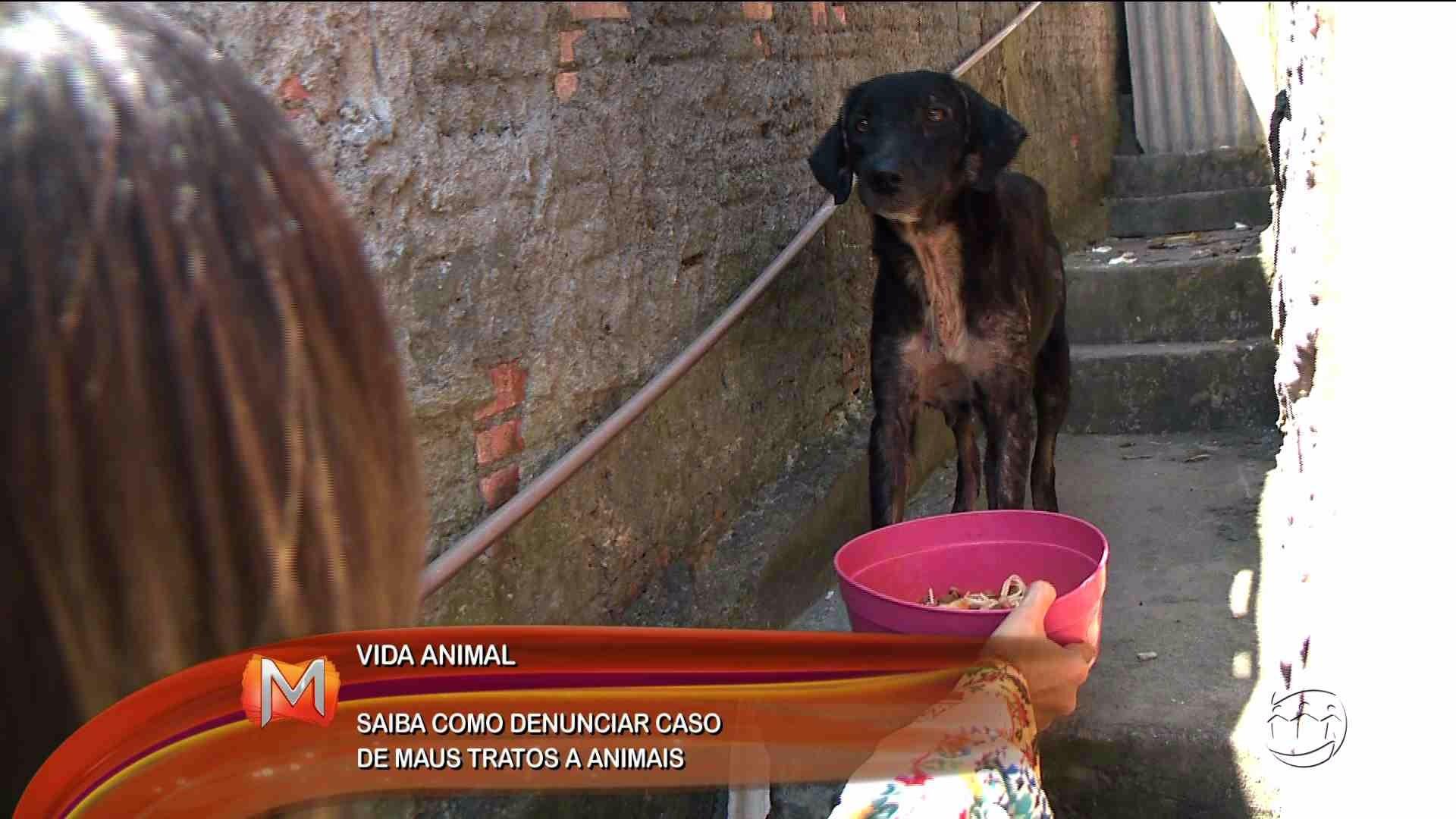 VIDA ANIMAL: MORADORES DENUNCIAM MAUS TRATOS A CACHORRO - Magazine - 17/08/17